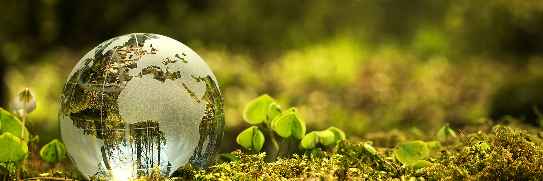 ICO Icoimagen sostenibilidad